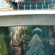 Постер, плакат: Cruise liner by Royal Caribbean Oasis of the Seas