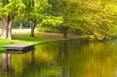 Beautiful City park in Rotterdam, Netherlands — Stock Photo