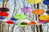Many umbrellas hang on trees. Freedom. — Stock Photo