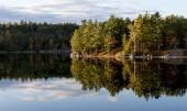 Evening Light on Northern Lake Shoreline — Stock Photo