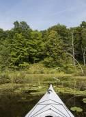 Kayak in the Wetlands — Stock Photo
