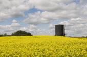 Oil Tank in Canola Field — Stock Photo
