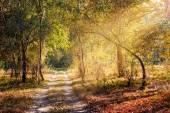 Sunray in the Autumn Forest — Stock Photo