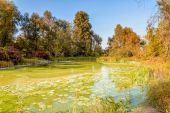 Green Pond and Tree — Stockfoto