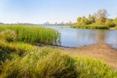 Herbs and Reeds Close to the River — Stock Photo