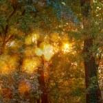 Autumn Light Symphony — Stock Photo #54212689