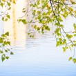 Birch Leaves and Water Reflection — Stock Photo #55383457