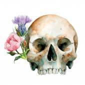 Human Skull, Halloween, Day Of The Dead, Vector Illustration. — Stock Vector
