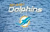 Miami dolphins — Stock Photo