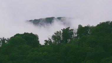 Fog raising — Stock Video
