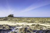 Seascape and stone — Stock Photo