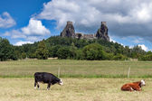 Czech Republic - stronghold Trosky in Cesky raj (Czech paradise) with cows — Stock Photo