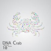 Molecular structure in the form of crab — Stock Vector