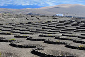 Vineyards at La Geria Valley, Lanzarote Island, Canary Islands, — Stock Photo
