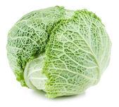 Savoy cabbage isolated — Stock Photo