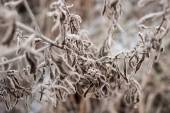 Herbaceous plants in the first frost — Stock Photo