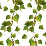 Постер, плакат: White seamless wallpaper with green leaves of birch branches