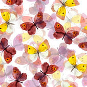 Seamless pattern with decorative hand painted drawing - colorful butterfly — Stock Photo