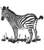 Zebra Vector Art — Stock Vector