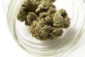 Marijuana — Stock fotografie