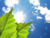 Leaves and cloudy sky, and sun — Stock Photo