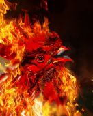 Red Rooster of fire. Symbol of fire. — Stock Photo