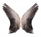 Wild goose wing. Isolated on white background. — Stock Photo