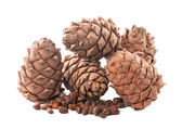 Pine cone pine nut. isolated, — 图库照片