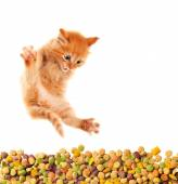Funny cat with appetite eats cat dry food. Isolated. — Stockfoto