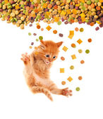 Funny cat with appetite eats cat dry food. Isolated. — Stock Photo