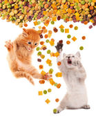 Funny cat with appetite eats cat dry food. Isolated. — ストック写真