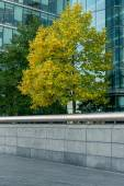 Trees in downtown surrounded by glass office buildings — Stock Photo