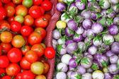 Tomaat en aubergines — Stockfoto
