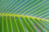 Part of palm tree — Stock Photo
