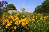 Yellow Daylily shining in front of an ancient amphora — Stock Photo
