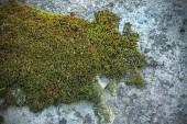 Fundo de textura de cimento mossy — Fotografia Stock