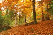 Beauty landscape autumn forest view — Stock Photo