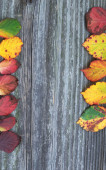Board with autumn leaves concept  — Foto Stock