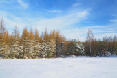 Winter forest landscape with hunting house — Stock Photo