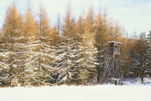 Winter forest landscape with hunting house — Stockfoto