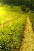 Green scenery landscape — Stock Photo