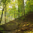 Sun shining on the forest slope — Stock Photo #58964957