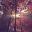 Beauty forest with sunrays in the morning — Stock Photo #59383815