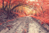 Old muddy forest road — Stock Photo