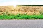 Road grass board  — Stock Photo
