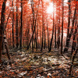 Beauty forest with sunrays in the morning — Stock Photo #60663093