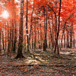 Beauty forest with sunrays in the morning — Stock Photo #60663513