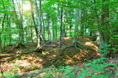 Forest with sunrays  — Stock Photo