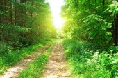 The forest road — Stock Photo