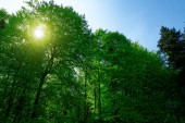 Beauty forest with sunrays — Stock Photo